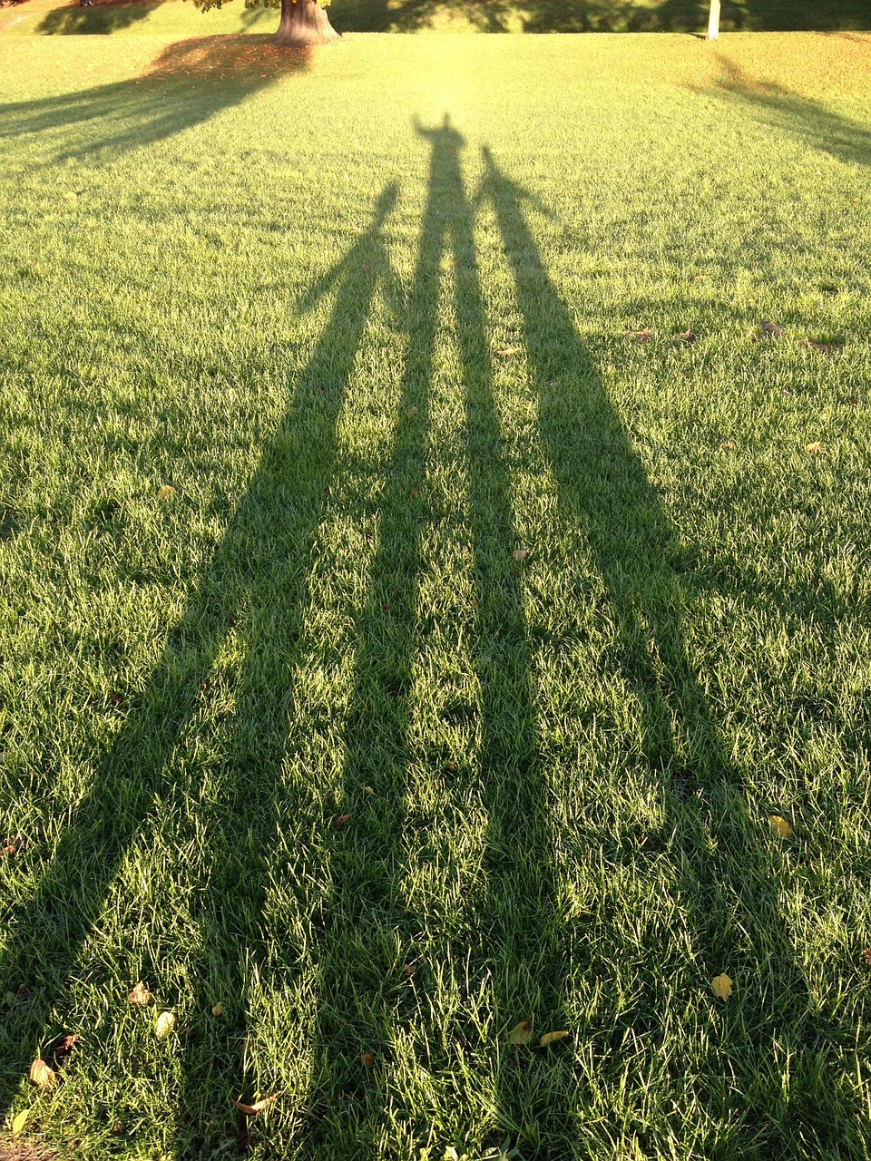 shadows-265295_1280.jpg
