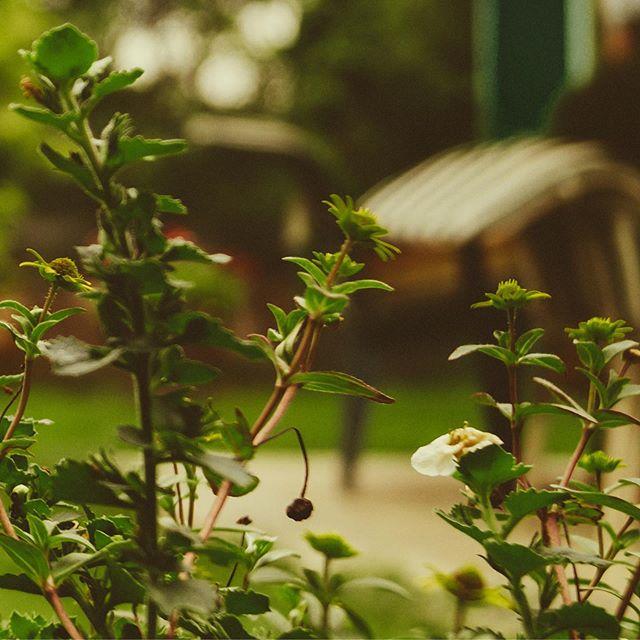 Gesucht: Ungestörte Gartenzeit - Gefunden: natürlicher Sichtschutz in Form einer neuen Hecke! . . . #münchen #garten #sichtschutz #zaunbau #aichach