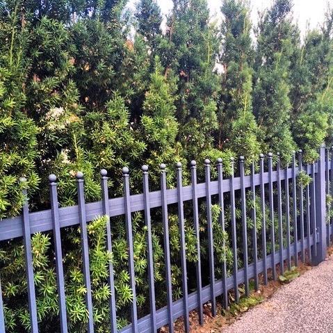 Wir lieben Hecken 🌿🌳🌲! Hier eine unserer frisch gepflanzten Eibenhecken (botanischer Name: Taxus media hicksii) Die Eibe ist sehr schnittverträglich und pflegeleicht.  Welche Pflanzenart ist perfekt für Ihren Garten?  Erfahren Sie mehr auf www.heckenhutzler.de . . . #heckenhutzler #aichach #münchenliebe #homemünchen #neubau #neuergarten #hecken #heckenschnitt #eibe #taxusmediahicksii #aichachfriedberg