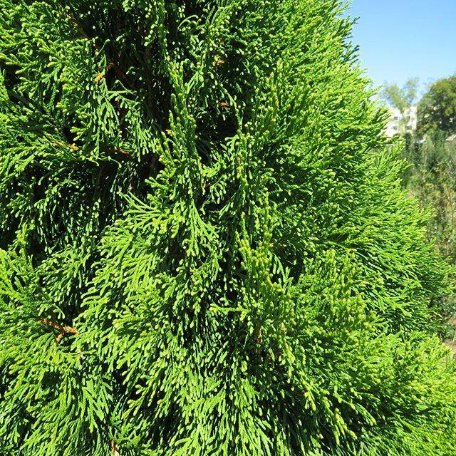 Frisches Grün - ganz ohne Filter! Bereit für eine neue Hecke? Wir haben hier einen kostenlosen Heckenpflanzguide erstellt, damit die professionelle Pflanzung ein Kinderspiel wird 🌿Hier klicken und von Gartentips direkt vom Gärtnermeister profitieren: https://bit.ly/2lYw8Jc . . . #gartentips #münchenliebe #aichach #heckenpflanzen #garten #sichtschutz #umweltfreundlich #bayern #regional