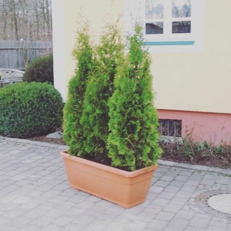 Der Herbst 🍂ist eine der besten Jahreszeiten um neue Hecken einzupflanzen.  Aber wie geht es nach der Pflanzung weiter? Erfahren Sie mehr in unseren hilfreichen Gartentips: https://bit.ly/2lJWE9n . . . #gartentips #aichach #münchen #Bayern