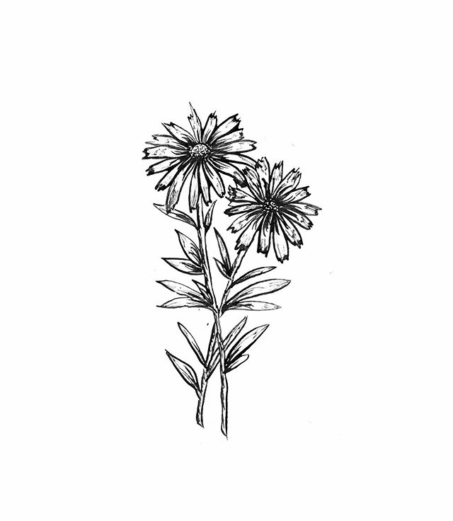 A little Texas Wildflower for this cloudy Friday 🌼 . . . . #womenwhodraw #phillycreatives #penandink #illustration #linedrawing #tattoo #minimalism #wildflowers #floral #flowertattoo #wildflowertattoo