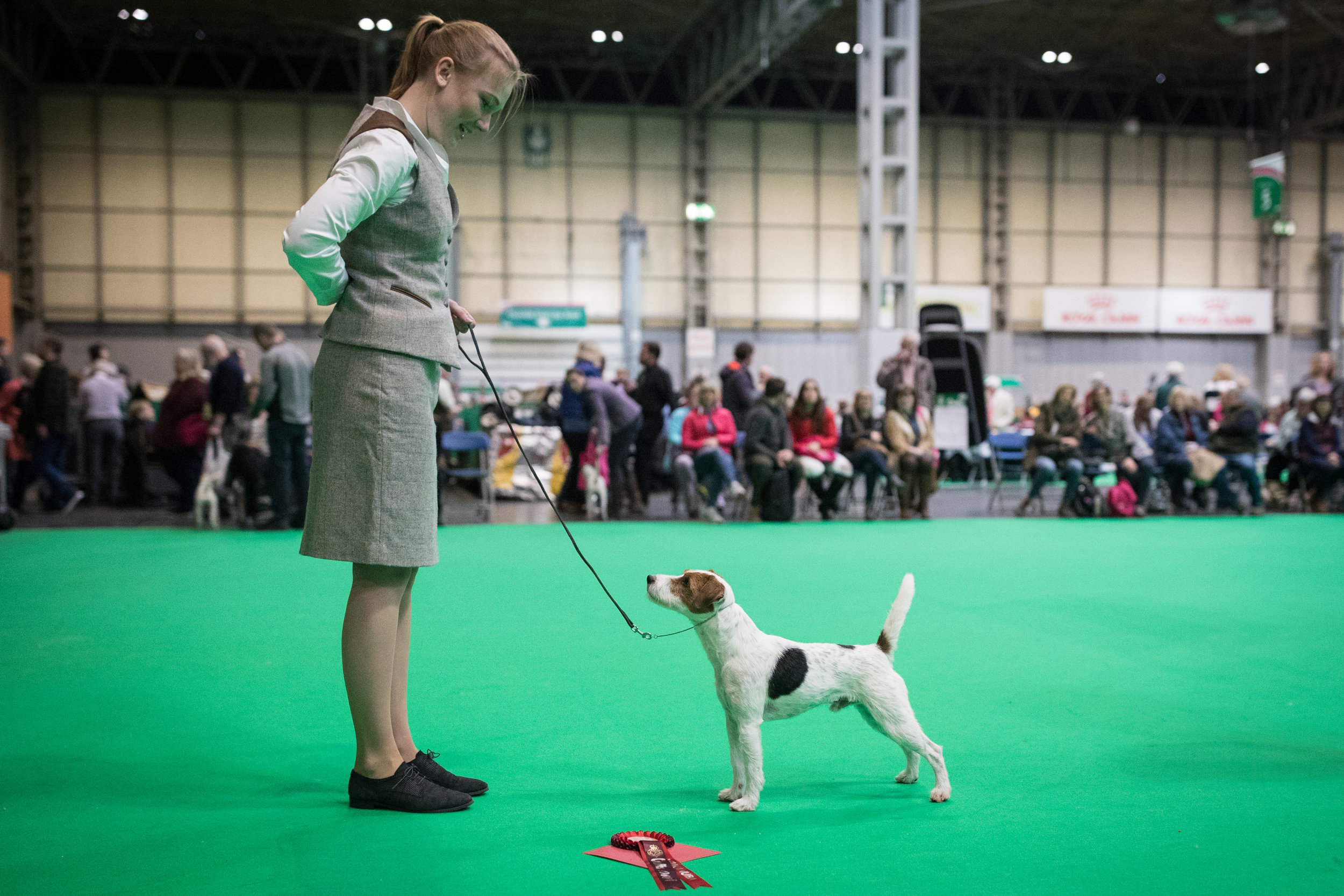 Lennon almost 3 years old, at Crufts 2018