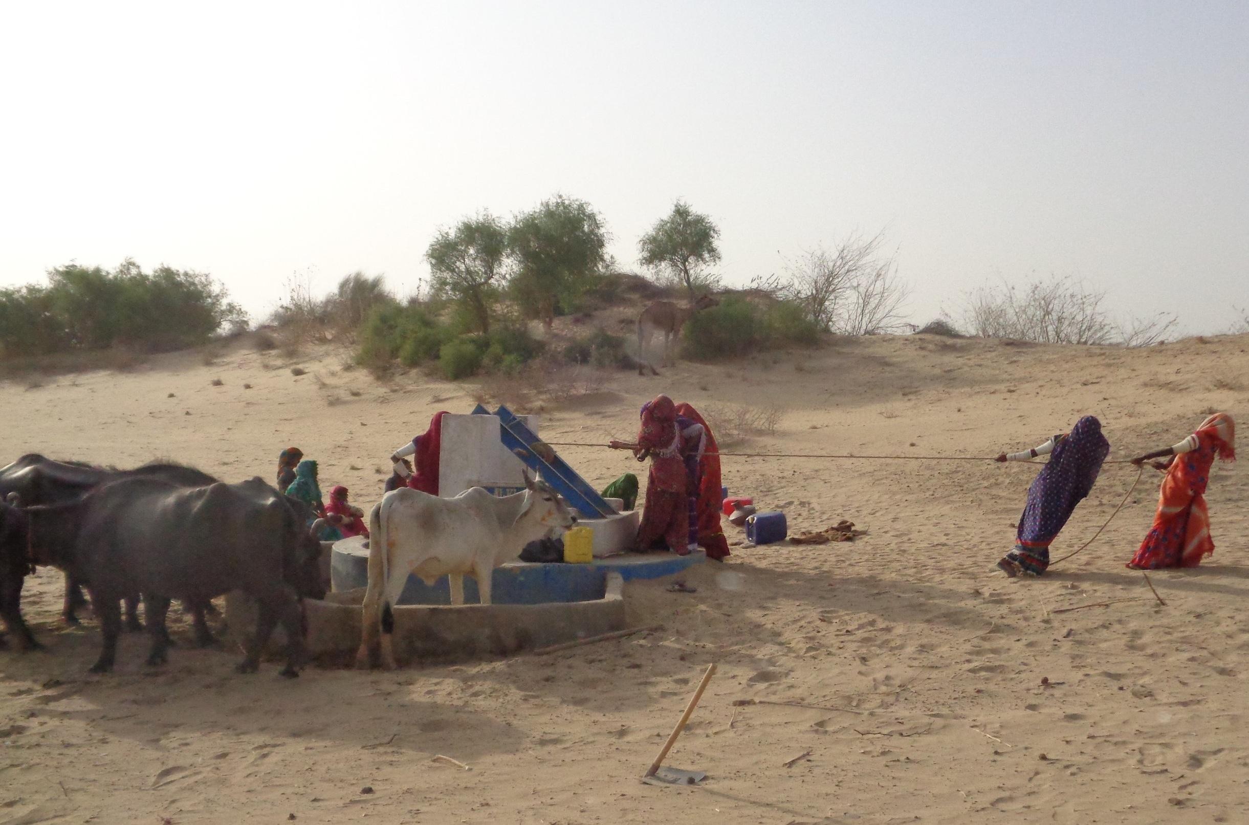 The Goal:$8,036 - Help us raise $8,036 to build a solar water pump in the village of Dabho Bheel, Tharparkar Pakistan.