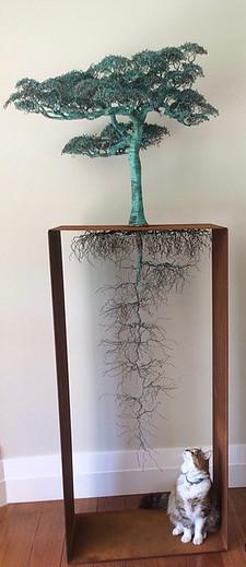 LIGNUM ERRANTIA WANDERING TREE