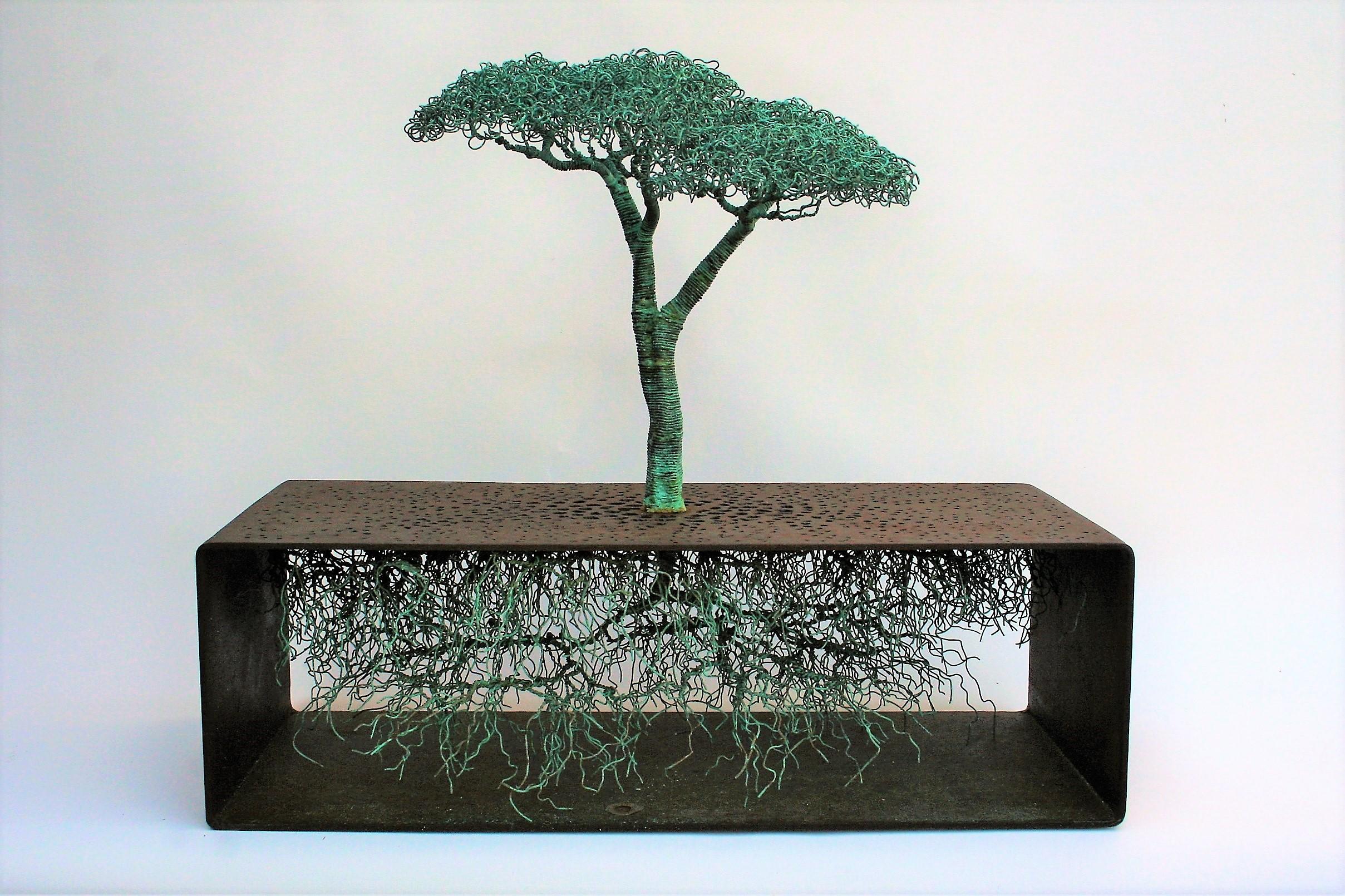TREE OF THE PLAIN