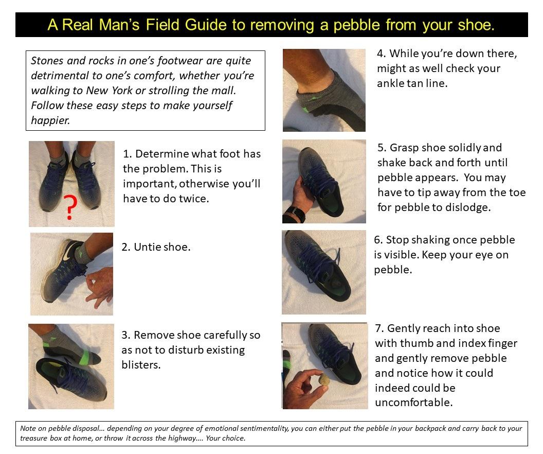 Field+Guide+Pebbles.jpg