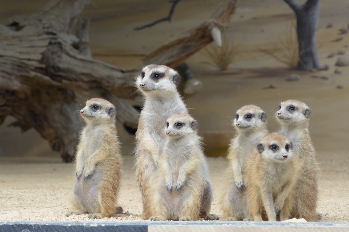 Hunter Valley Zoo - Discount vouchers are available from reception