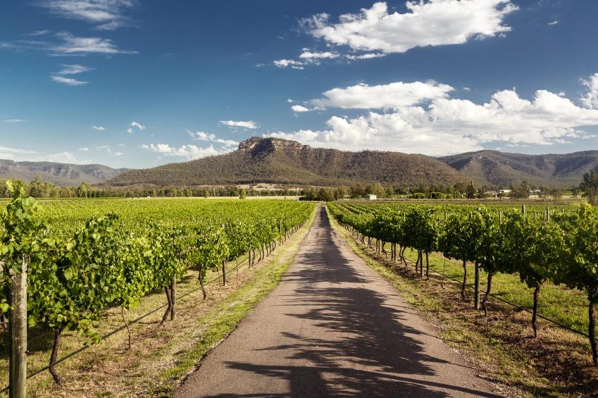 hunter-valley-vineyard.jpg