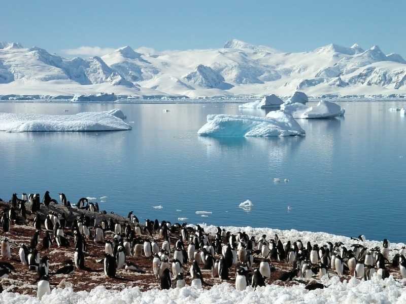 antarctica-penguins.jpg