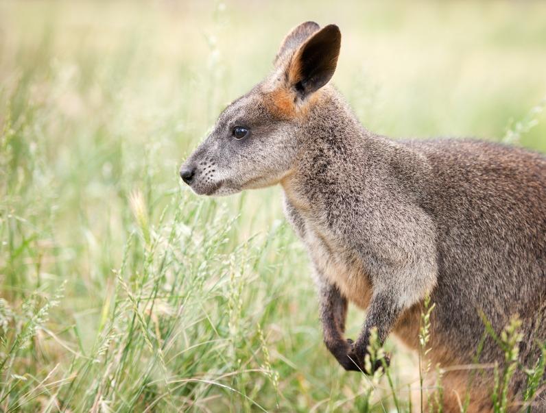 kangaroo-island.jpg