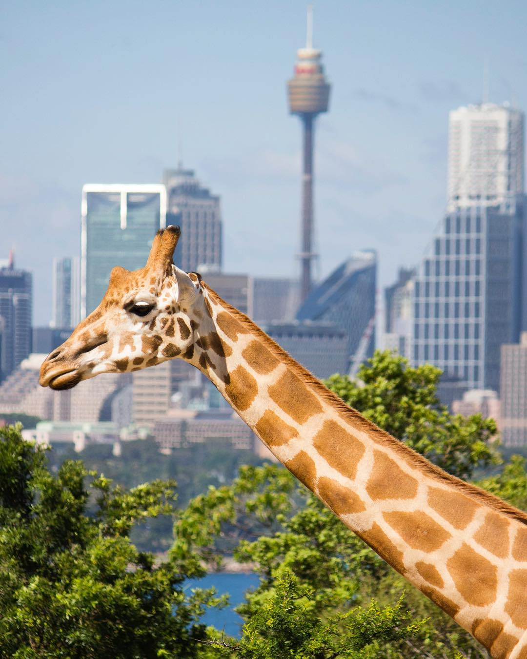 Image credit:    @tarongazoo   /Instagram