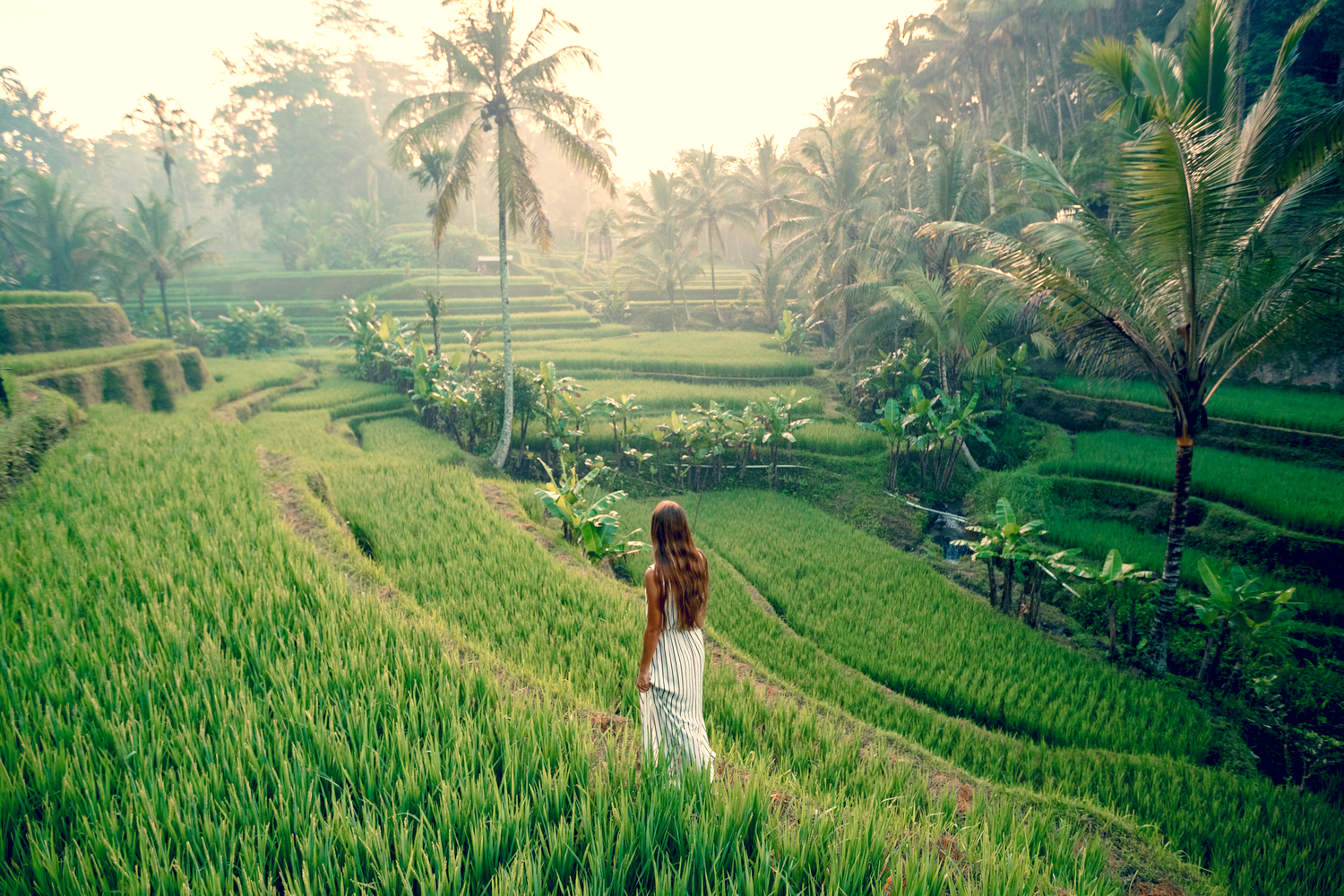 Young woman in a white dress walking through the lush green rice fields of Ubud in Bali