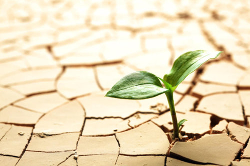 plant-cracked-mud.jpg