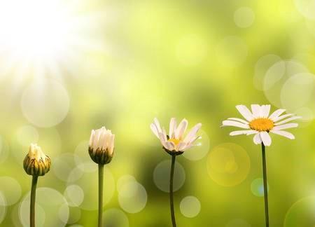 daisyflower.jpg