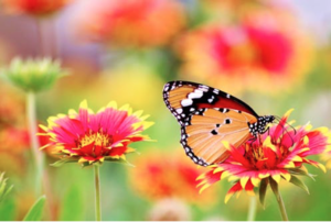 flower-butterfly.png