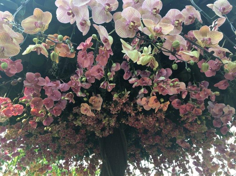 Cream pink orchid tree.jpg