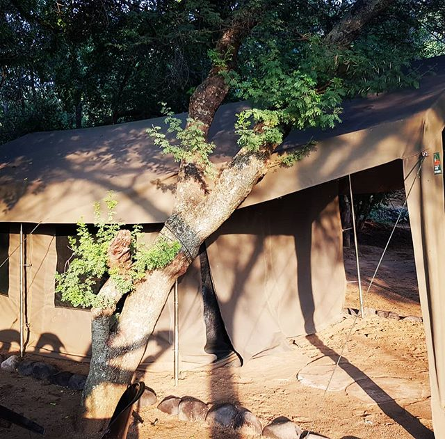 Book a furnished Safari Tent for you and your partner now on: www.zingelatrailrun.co.za  #trailrunning #running #zingela #trailrunner