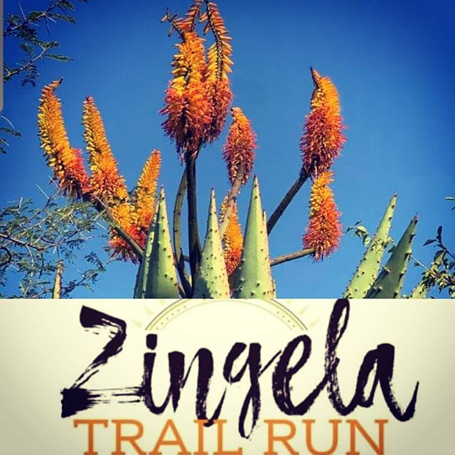 Zingela Trail Run 2020 entries are open www.zingelatrailrun.co.za #camping #running #trailrunning #ZingelaTrailRun2020 #campinstyle