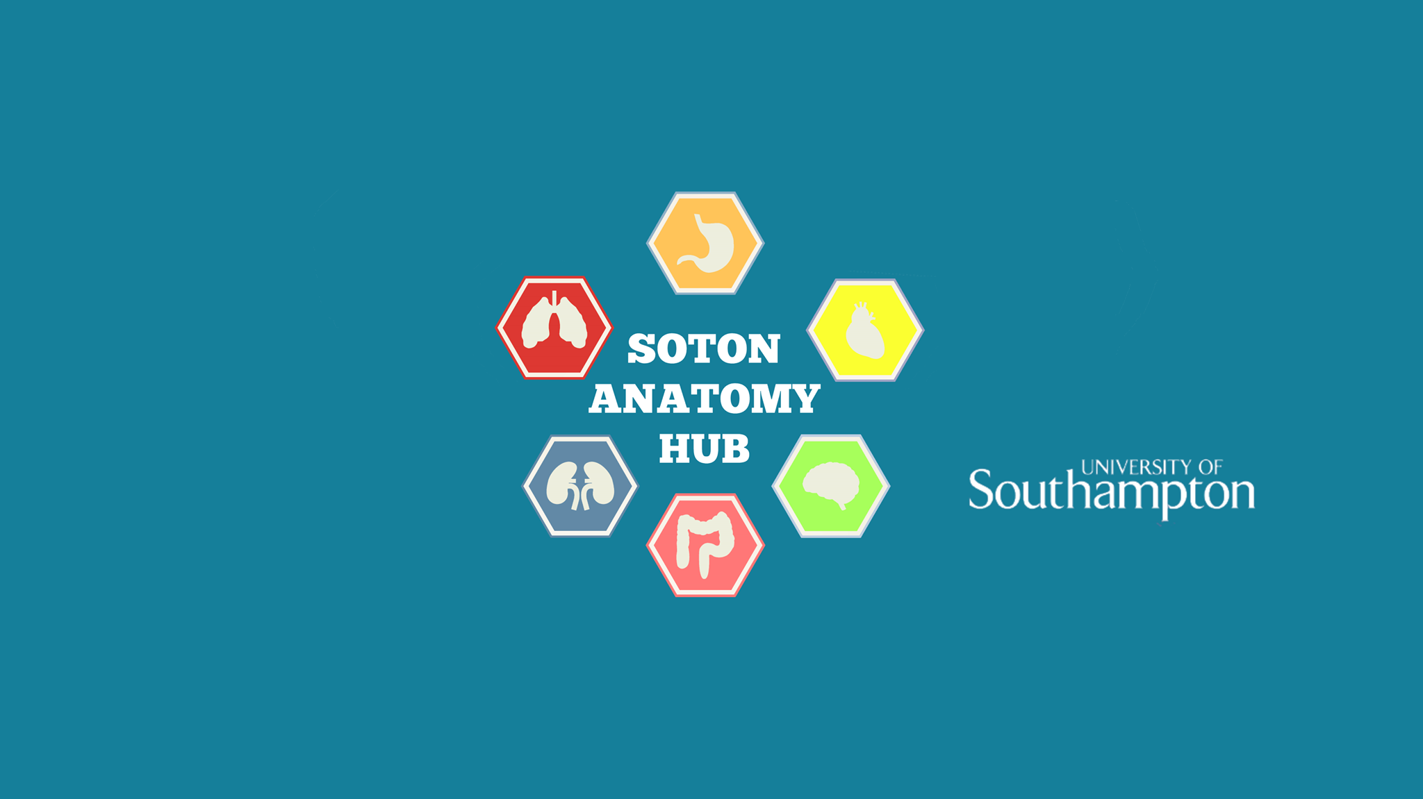 Soton Anatomy Hub - Soton Anatomy Hub is the home of all things anatomy! Here you can find loads of useful resources to supplement your learning.
