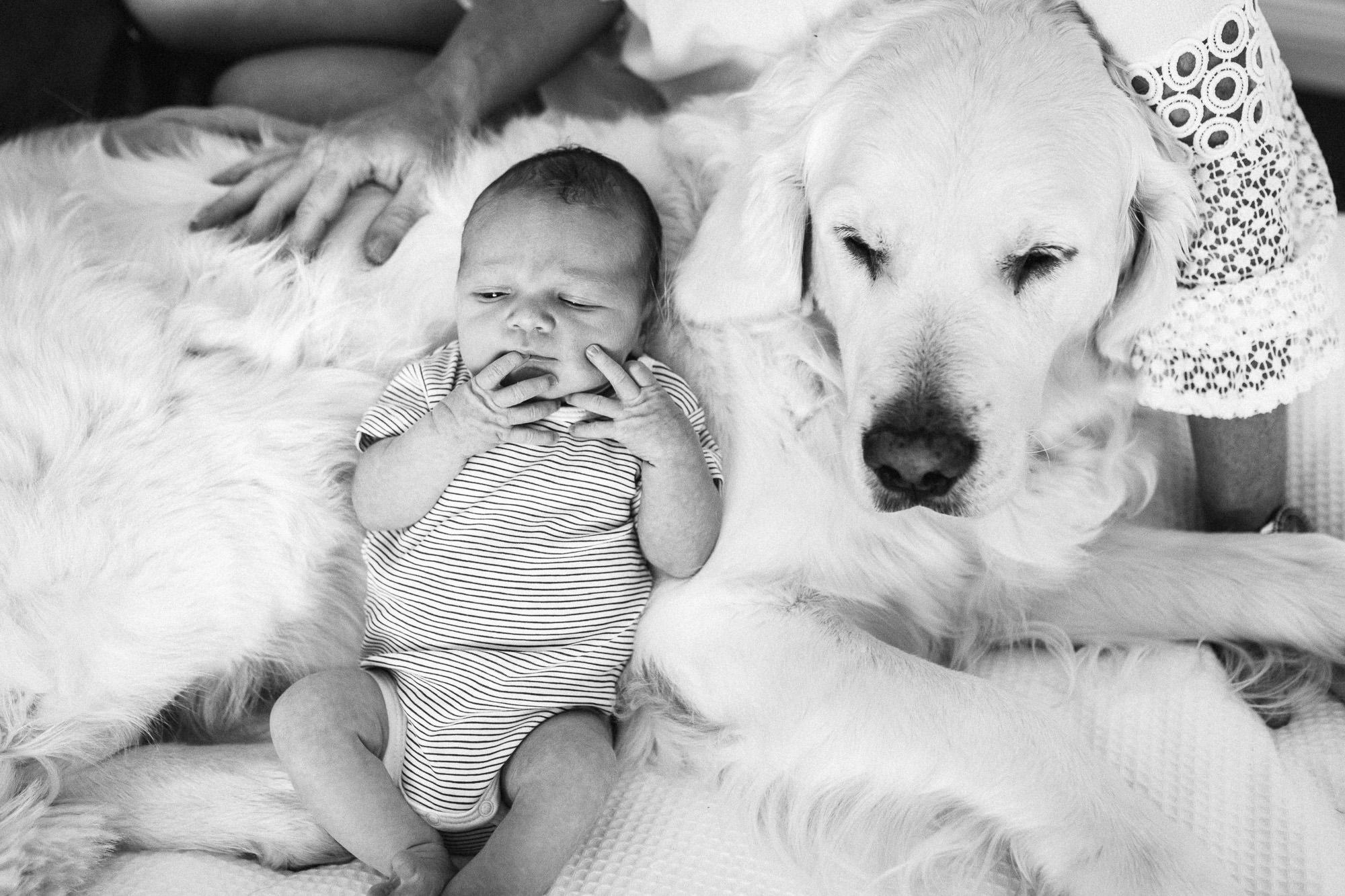 baby & d0g.jpg