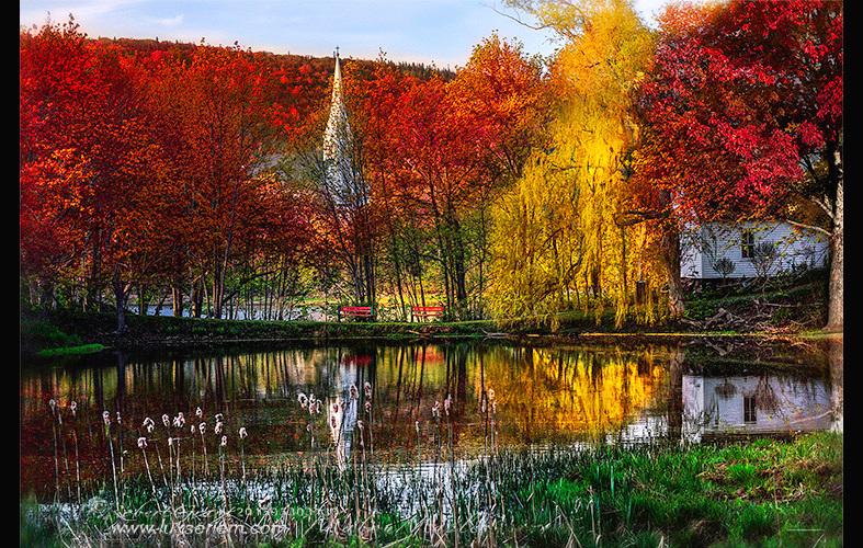 Mabou Maples - Autumn