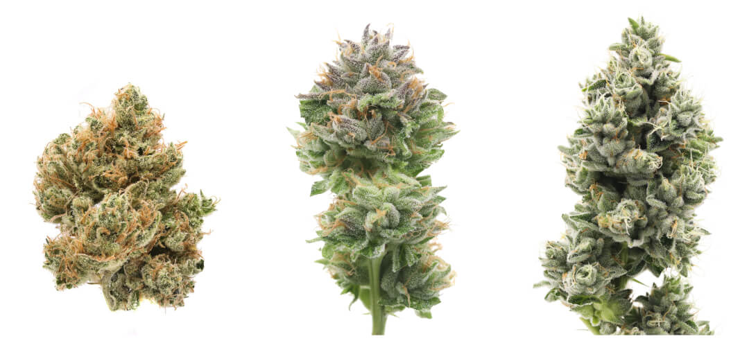 FLOWER - THERE'S A REASON OUR FLOWER IS RENOWNED INDUSTRY WIDE - WE NEVER BLIND SOURCE. WE METICULOUSLY GROW OUR LADIES IN HOUSE WITH WHOLLY ORGANIC INPUTS, DRY AND CURE IT BASED ON DENSITY AND TRIM IT BY HAND TO BRING YOU THE MOST OPULENT, FLAVOR DENSE NUGS IN THE MARKET.