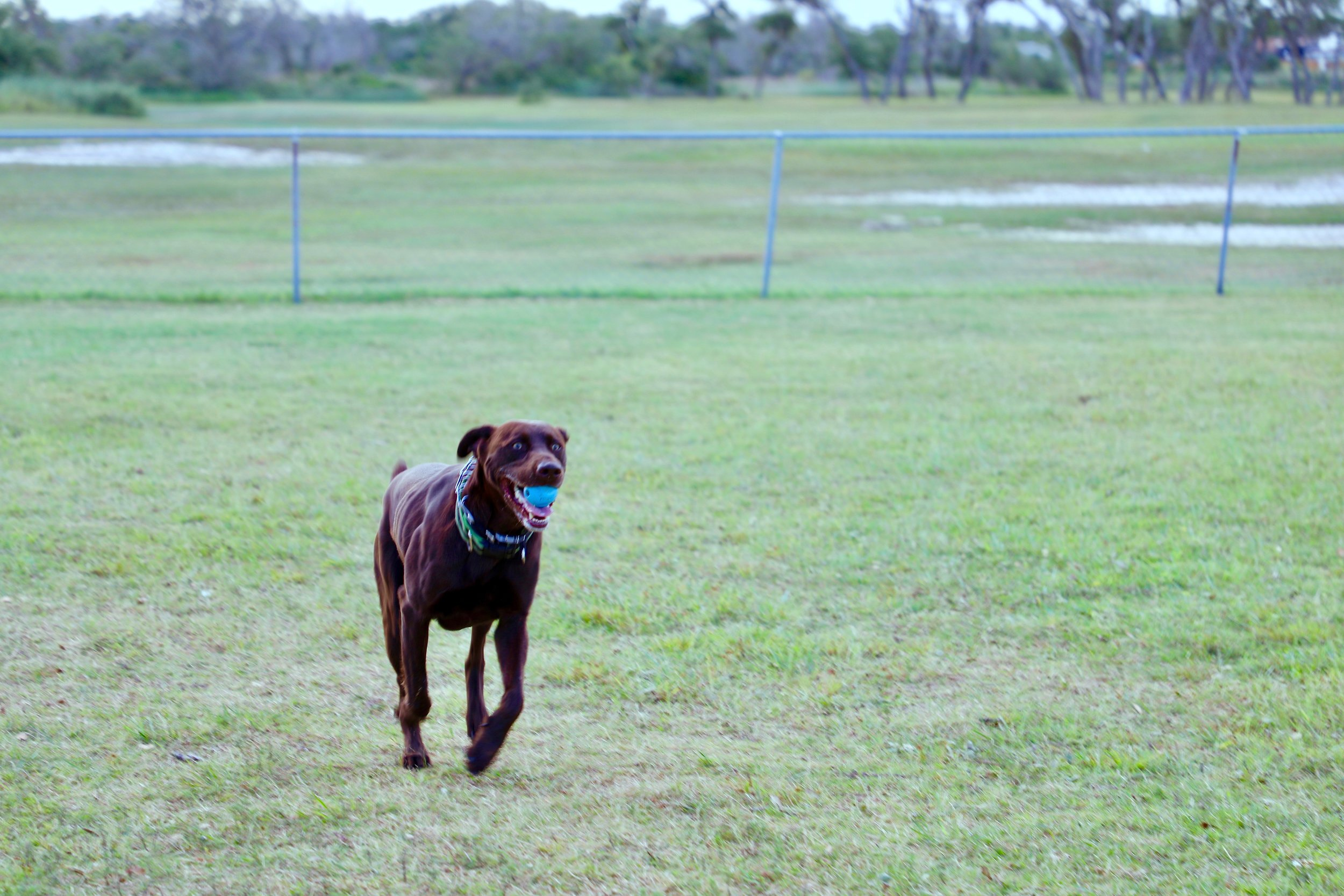 Dog Park  Your pets will love our fenced dog park.