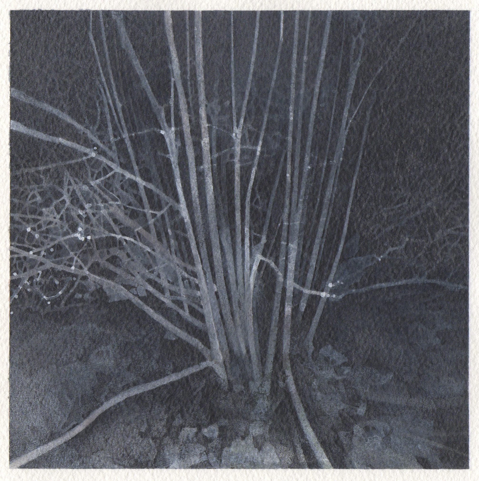 "winter night trees  2013  graphite, watercolor, & gouache on paper  6.5"" x 6.5"""