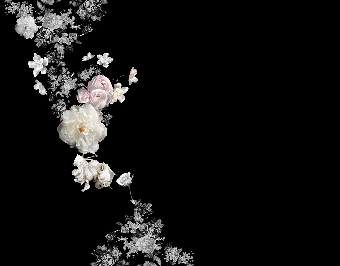Flower II , 25 x 32 inches, archival pigment print, 2009