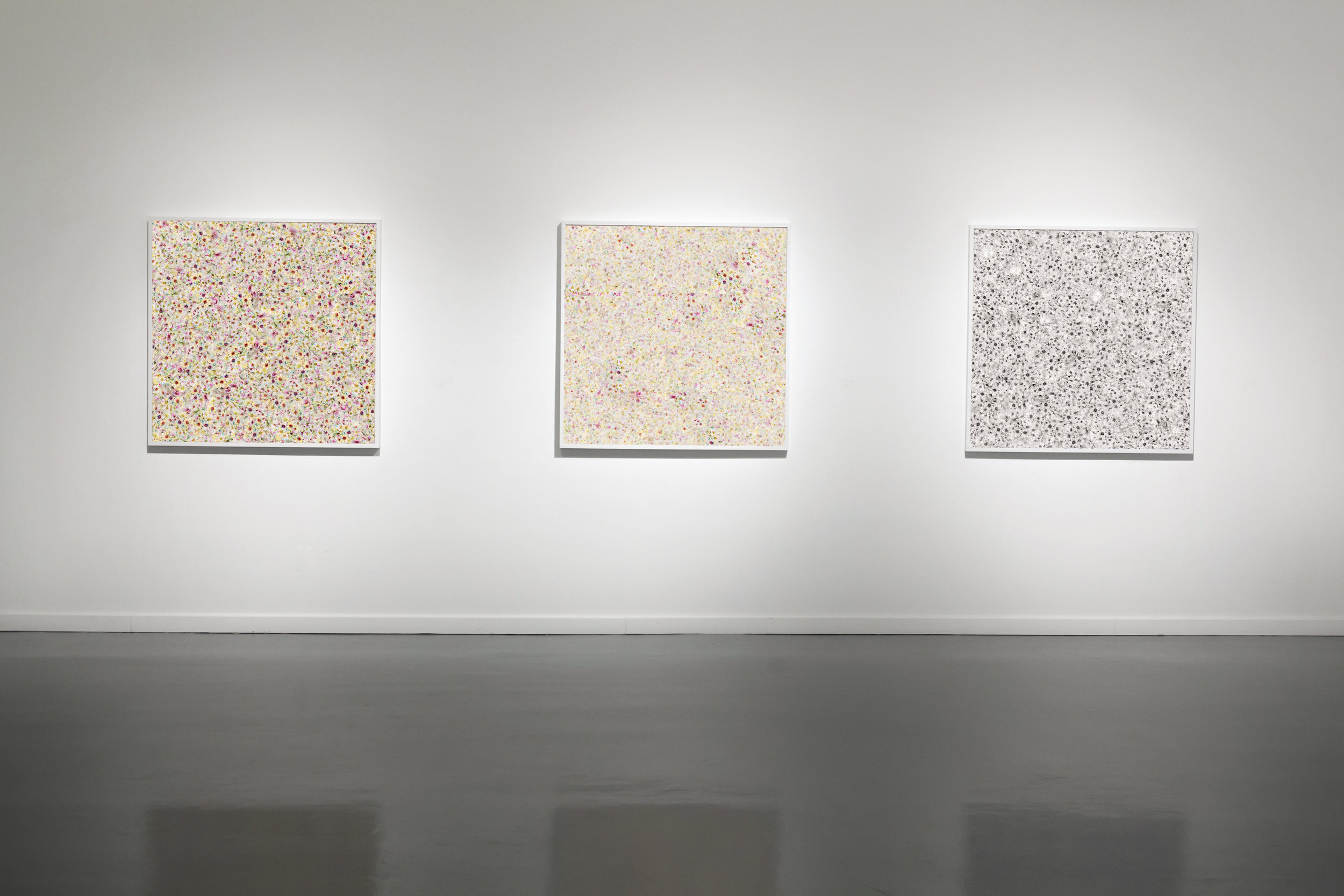 Flower Field Variations 1,2,3,  at University of Texas Arlington Gallery, Arlington, TX, 2017