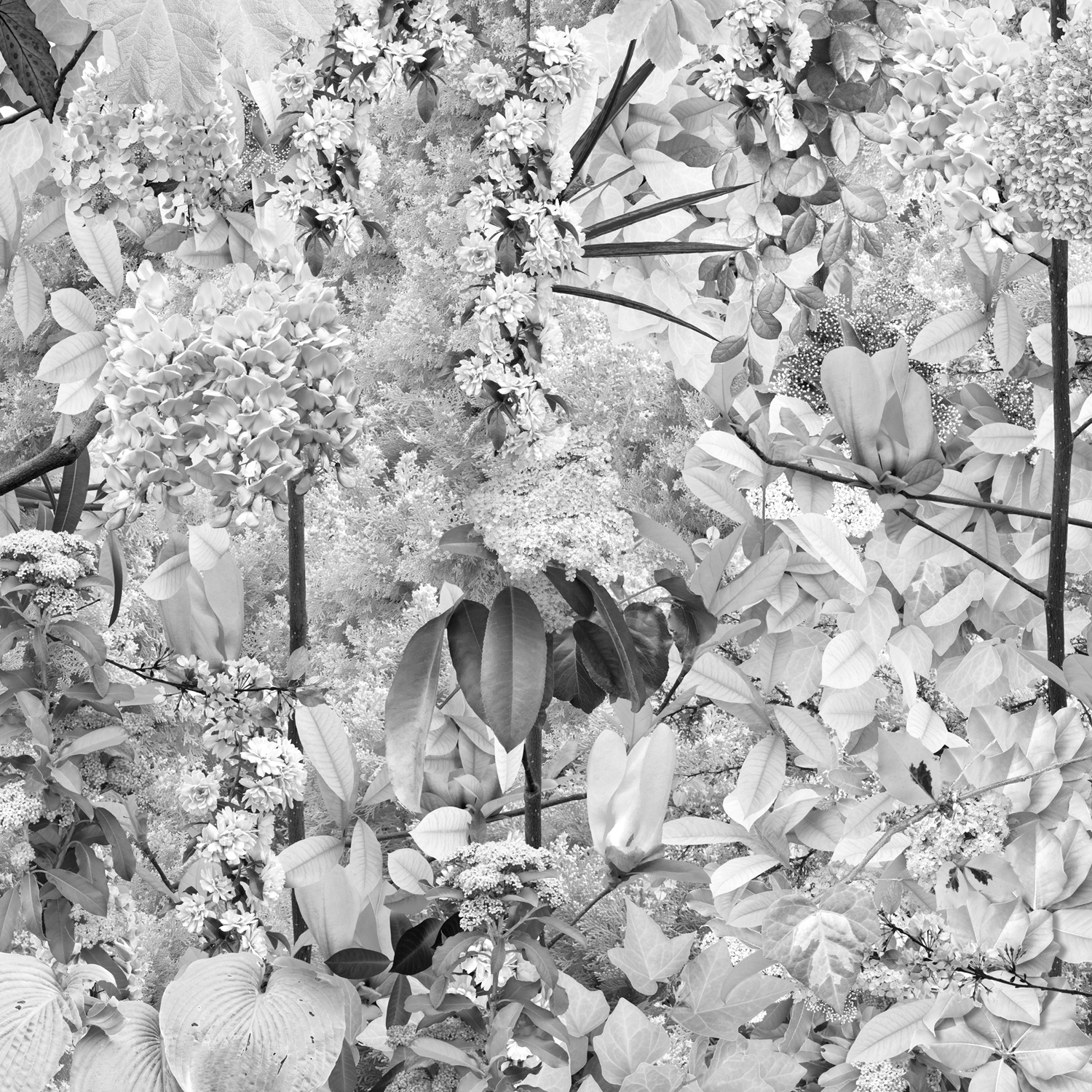 Garden 6, White Flowers , 30 x 30 inches, archival pigment print, 2019
