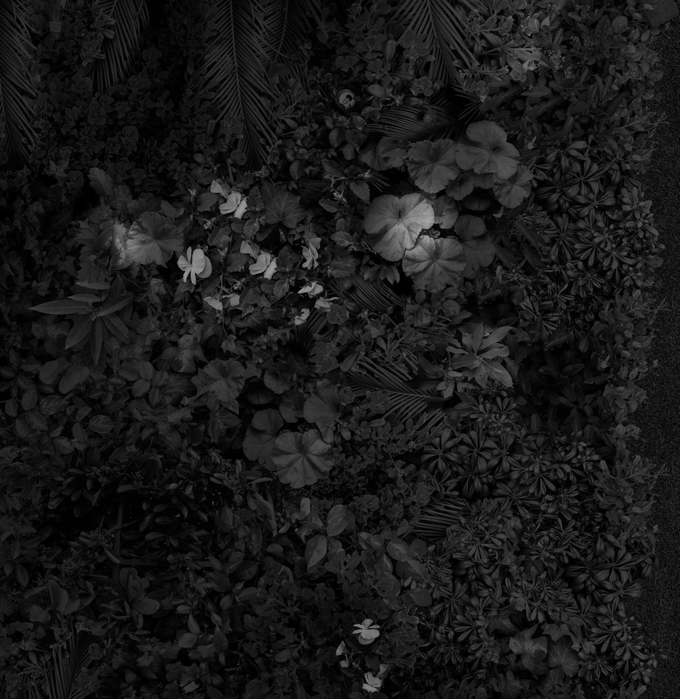Garden 2, Las Vegas Greens , 36 x 35 inches, archival pigment print, 2018