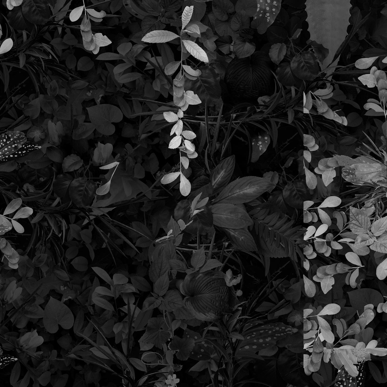 Garden 5, Confetti , 22 x 22 inches, archival pigment print, 2109