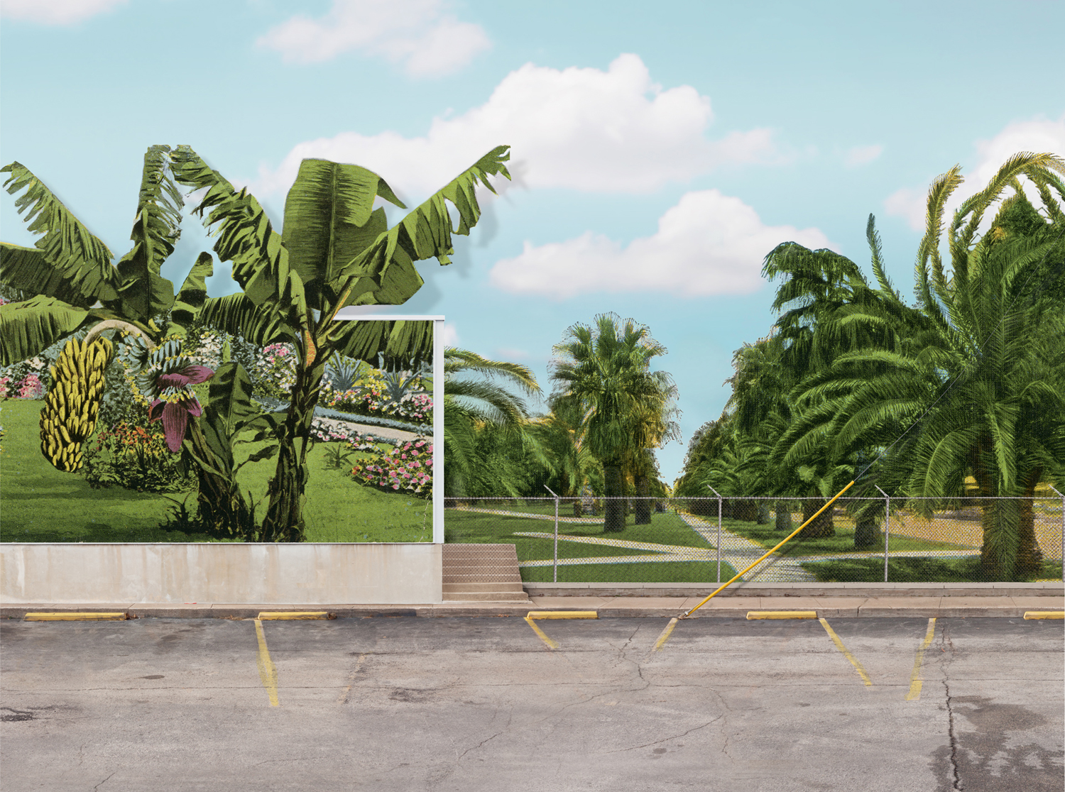 The Palm Tree,  23 x 31 inches, archival pigment print, 2014