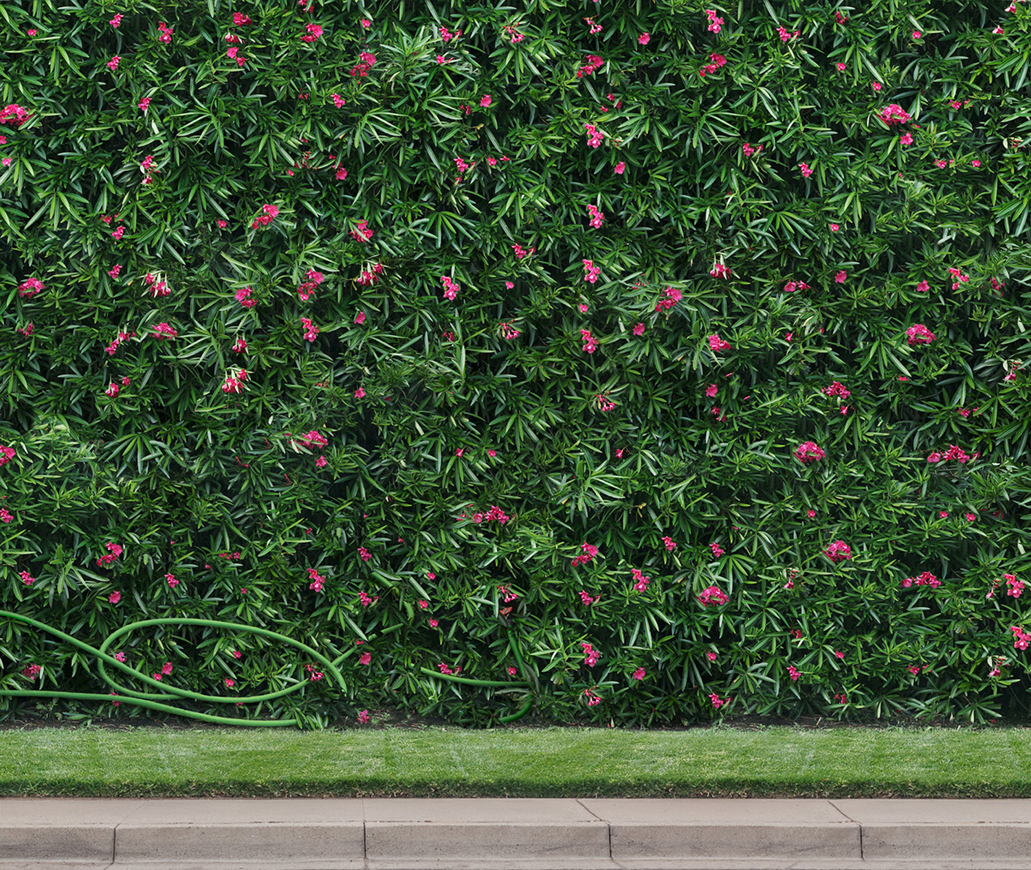 The Hedge, 16 x 19 inches, archival pigment print, 2014
