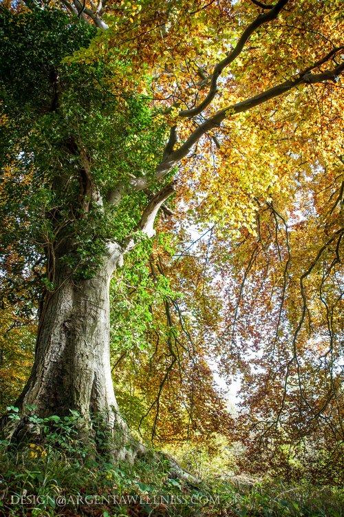 Argenta+TREES-130.jpg
