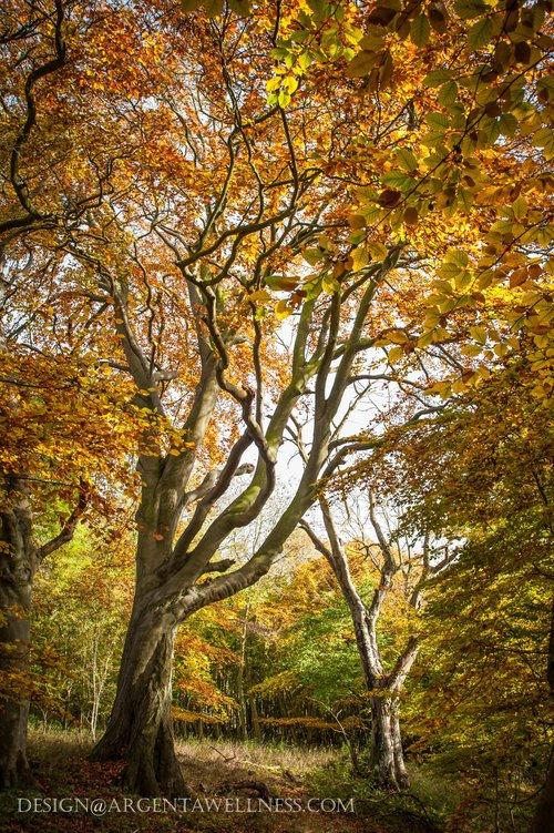 Argenta+TREES-133.jpg