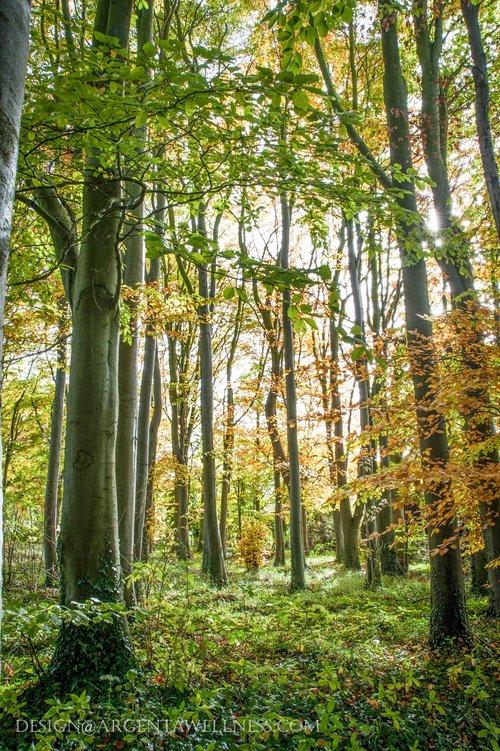 Argenta+TREES-21.jpg