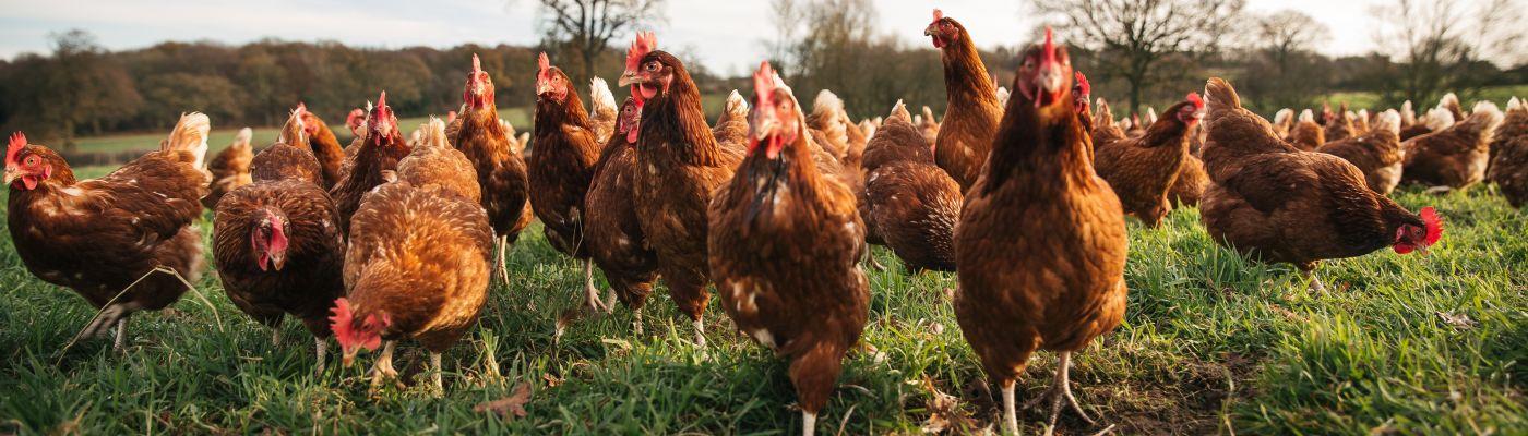 Stokes Farm Eggs.jpg