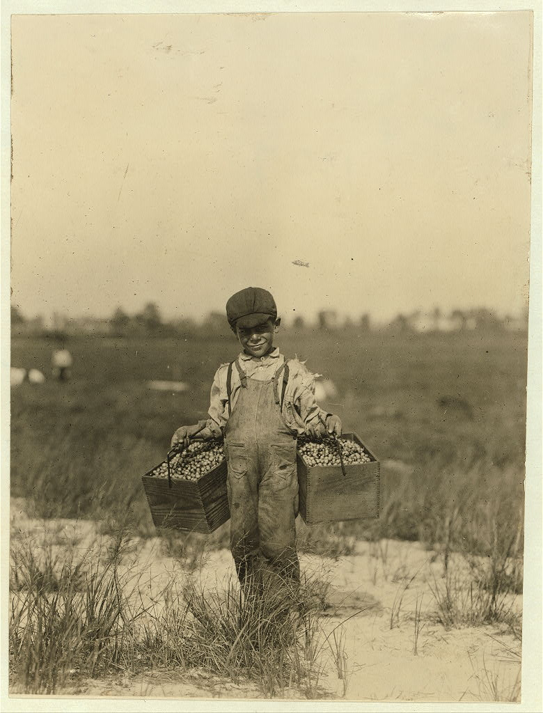 """Peula[?] Amava[?], 8 years old. Has had 3 years of this work. Carries the cranberries and tends baby between times. We found him at work on berry farm, Cannon, Del. in May, 1910, before school closed. Browns Mills, N.J. This is the fourth week of school and the people expect to remain here two weeks more. Location: Browns Mills, New Jersey.,"" Lewis Wickes Hines, photographer, September 1910. Library of Congress LOT 7475, v. 1, no. 1127"