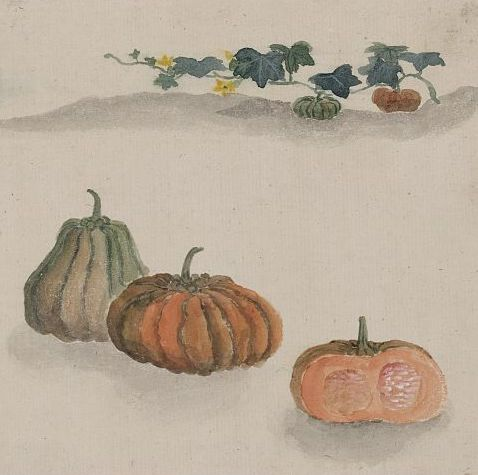 """""""Kabocha squash with plant growing in the background,"""" watercolor, between 1800-1860. Library of Congress FP 2 - JPD, no. 938 (A size)"""