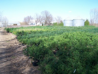 - We have thousands of your favorite potted or bare root windbreak/shade trees/shrubs available for planting.