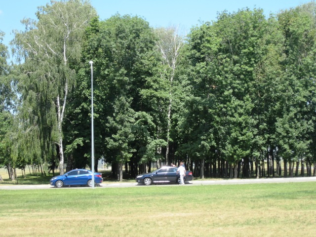 This picture was right outside the airport in Kiev, the main varieties in the windbreaks are: Lindens, Ash, Birch, Hackberry, Oaks, Maples, Elms, Horse Chestnut and Locust. Weedy trees such as Box elder and Amur maple has taken over some areas.