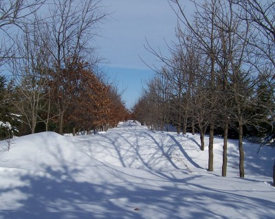 2008-2009 winter, All this snow drifted in and piled up here and partially shaded from the trees, the snow melted slowly in the spring. Since the ground is not frozen under all this snow, water soaks into the ground instead of running off into our rivers and streams which is a major cause of flooding in the springtime.. The last of this snow here did not melt until April 23, 2009