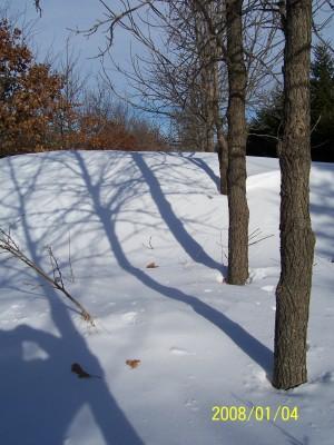 Living Snow Fence 2008.jpg