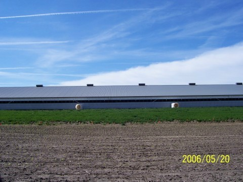 Above is a hog building in Iowa just before we planted it.  We used 2 rows of potted austrees 5 Ft tall spaced 8 ft apart in the row and 8 ft. between rows. We are looking south in this picture. Go Right >