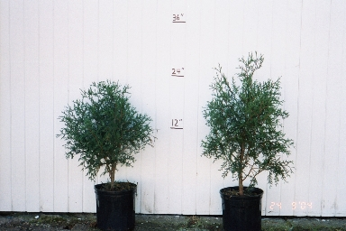 Our potted trees ready for sale anytime, bare root trees can only be planted in the springtime.