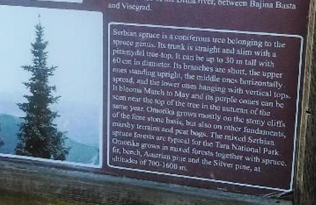 Explanation of the Serbian Spruce as described in the Tara National Forest, Serbia.