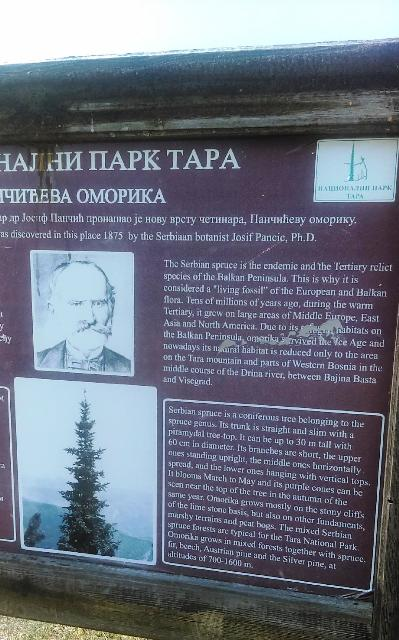 Picture of Botnist, Josif Pancie that discovered the Serbian Spruce in 1875.